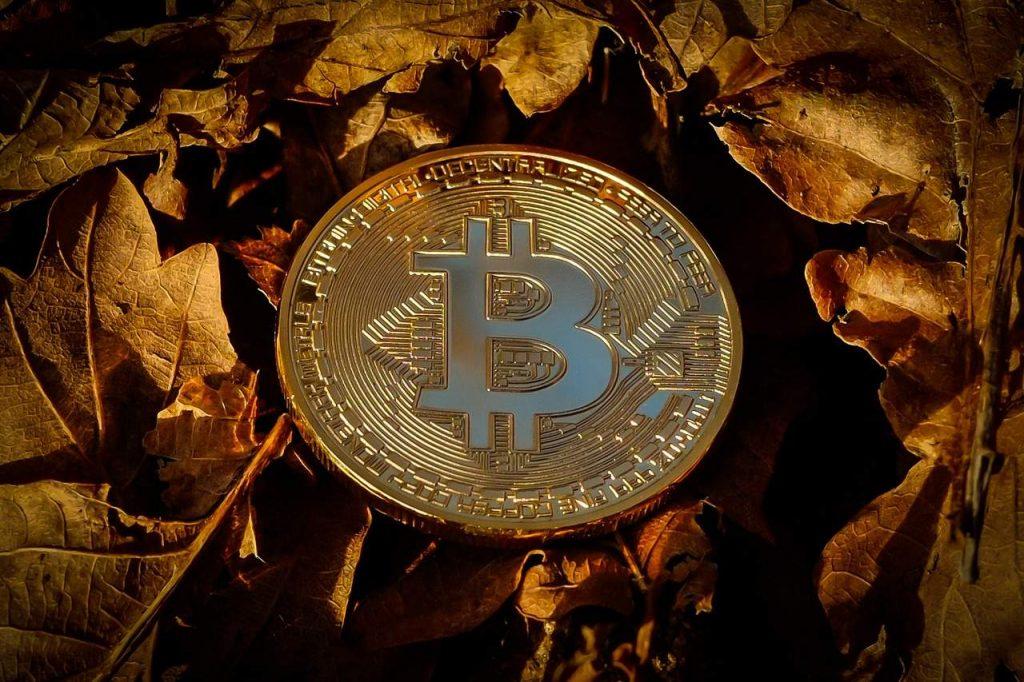 bitcoin halving valorização