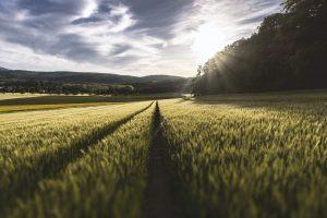 farm beats microsoft brasil