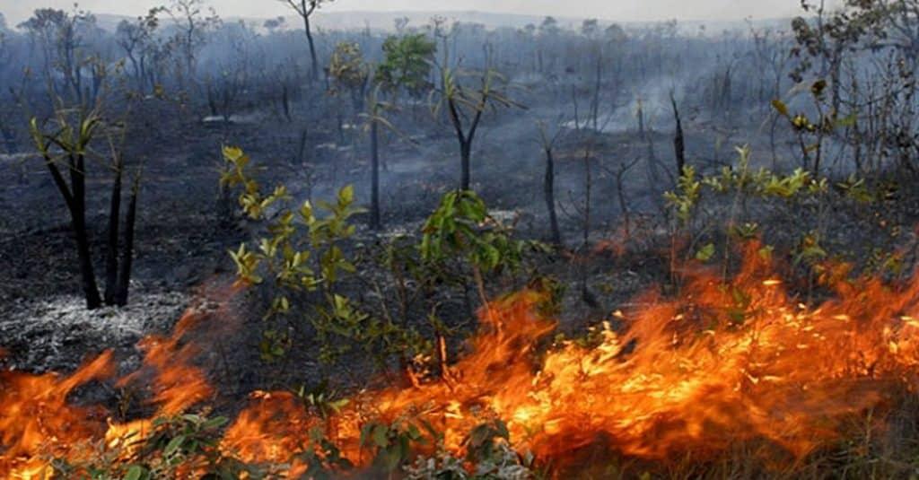 amazonia queimada bitcoin doação bitpay