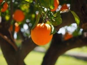 unick forex lusvarghi laranja prisão pirâmide