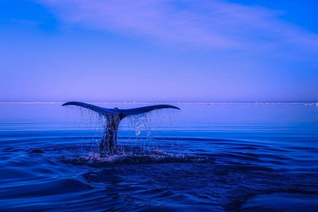 baleia-bitcoin-criptomoedas-o que é-como pensar como