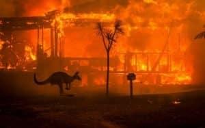 criptomoedas-austrália-queimadas-cangurus-animais-incêndio-doação-doar-ajudar