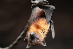 criptomoedas-token-coronacoin-morcego-china-coronavírus-covid19