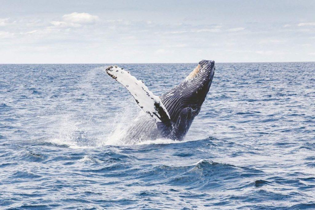 Uma das maiores baleias de bitcoin acaba de mover US$95.000.000 em BTC