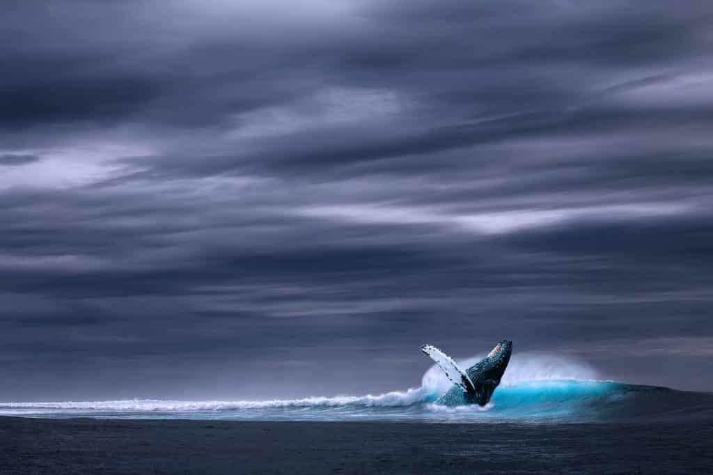 baleia-bitcoin-criptomoeda-trader-investimento