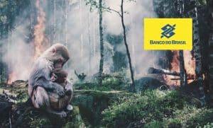 banco-do-brasil-economia-desmatamento-carne-bovina-saúde-amazonia-florestas-proteção (2)