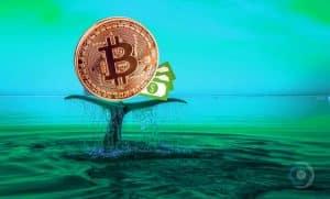 bitcoin-transação-dólar-maior-história-compra-venda-blockchain-baleia