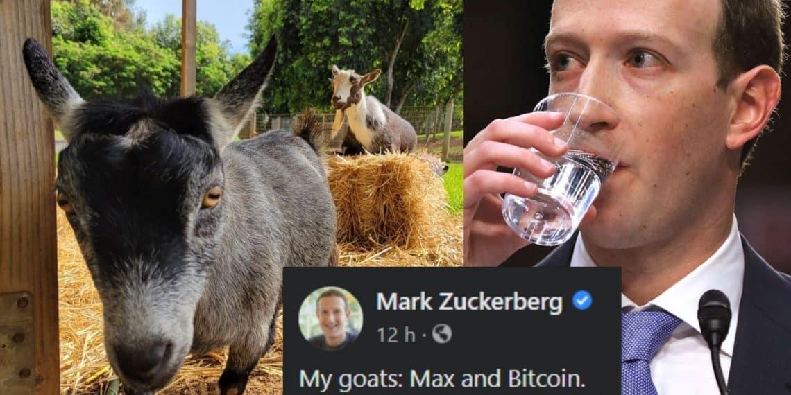 Mark Zuckenberg - bodes